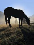 Sylwetka Żywieniowy Koń Zdjęcie Royalty Free