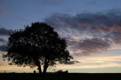 sylwetka 1 sunset drzewo Zdjęcie Royalty Free