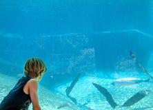Sylwetka chłopiec patrzeje aeal w akwarium zdjęcie royalty free