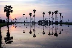 Sylwetka cukrowy drzewko palmowe na odbiciu Zdjęcia Royalty Free