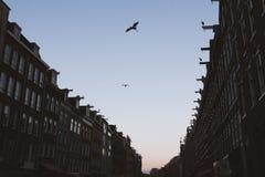 Sylwetka czapla nad Amsterdam ` s ulicą - półmrok obraz royalty free