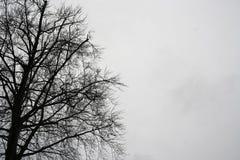 Sylwetka czarny tree& x27; s cień z białym odosobnionym tłem Zdjęcia Royalty Free