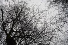 Sylwetka czarny tree& x27; s cień z białym odosobnionym tłem Zdjęcie Royalty Free