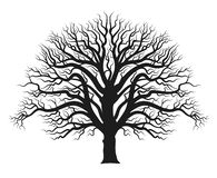 Sylwetka d?bowy drzewo royalty ilustracja