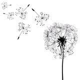 Sylwetka dandelion w wiatrze Zdjęcie Stock