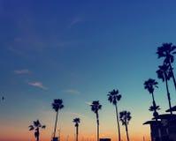 Sylwetka drzewka palmowe na zmierzchu Obrazy Royalty Free