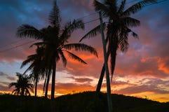 Sylwetka drzewka palmowe przeciw pięknemu zmierzchowi nad Cebu, Filipiny Obrazy Stock