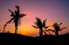 Sylwetka drzewka palmowe przeciw pięknemu zmierzchowi nad Cebu, Filipiny Obrazy Royalty Free