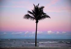 Sylwetka drzewka palmowe przy zmierzchem zdjęcie royalty free