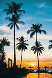 Sylwetka drzewka palmowe przy zmierzchem Obraz Royalty Free