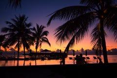 Sylwetka drzewka palmowe przy zmierzchem, rocznika filtr Fotografia Royalty Free