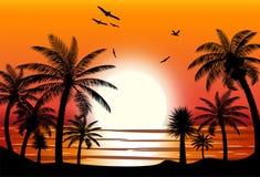 Sylwetka drzewko palmowe na plaży Fotografia Stock