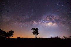 Sylwetka Drzewny i Milky sposób Długa ujawnienie fotografia Zdjęcie Stock
