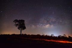 Sylwetka Drzewny i Milky sposób, Długa ujawnienie fotografia, z Obrazy Stock