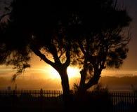 Sylwetka drzewny kształt Zdjęcia Stock