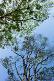 Sylwetka drzewo Zdjęcie Stock