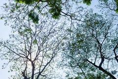 Sylwetka drzewo Fotografia Royalty Free