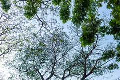 Sylwetka drzewo Obrazy Royalty Free