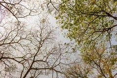 Sylwetka drzewo Obrazy Stock