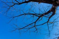 Sylwetka drzewo Zdjęcia Stock