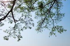 Sylwetka drzewo Zdjęcia Royalty Free