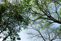 Sylwetka drzewo Obraz Royalty Free