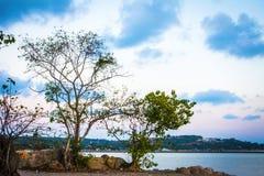 Sylwetka drzewo i zmierzch na morzu w wyspie Fotografia Royalty Free