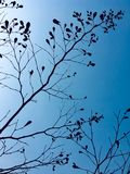 Sylwetka drzewo przeciw niebieskiemu niebu fotografia royalty free