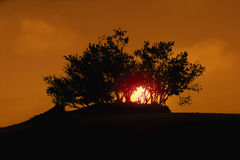 Sylwetka drzewo w pustyni obraz royalty free