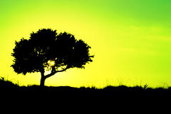 Sylwetka drzewo z koloru żółtego i zieleni tłem - ekologia Zdjęcia Royalty Free