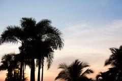 Sylwetka drzewo z niebem w wieczór fotografia royalty free