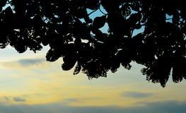 Sylwetka drzewo z zmierzchu nieba tłem Obrazy Royalty Free