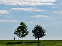 Sylwetka dwa drzewa w lata niebie Fotografia Royalty Free