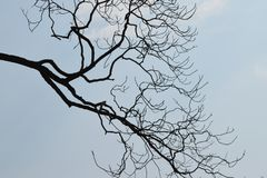 Sylwetka gałąź przeciw niebieskiemu niebu zdjęcie royalty free