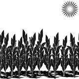 Sylwetka gazon z kukurudzą i cieniem royalty ilustracja