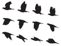 Sylwetka gołębi ruchu wektoru ptasi latający set ilustracji