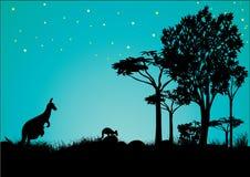 Sylwetka kangur z niebieskim niebem i gwiazdami zdjęcie stock