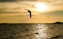 Sylwetka kierdel seagulls latać Zdjęcia Royalty Free