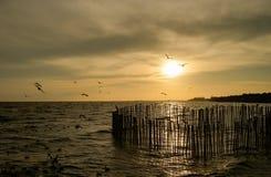 Sylwetka kierdel seagulls nad oceanem podczas zmierzchu, przy b Obraz Stock