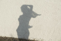 Sylwetka kobiety postać na naturalnym ściennym tle Kobiety obliczają na ścianie, artystyczna fotografia Kontrast, sylwetka dziewc Zdjęcia Royalty Free