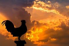 Sylwetka kogut wrona w wczesnym poranku Obraz Stock