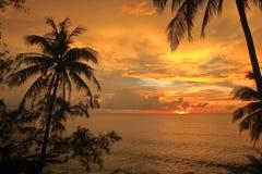 Sylwetka kokosowi drzewka palmowe i zmierzch Zdjęcie Stock