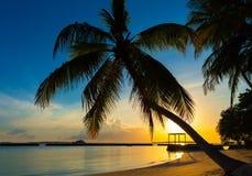Sylwetka kokosowy drzewko palmowe Obrazy Royalty Free