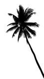 Sylwetka kokosowy drzewo ilustracja wektor