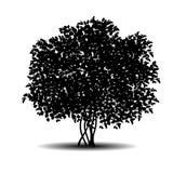 Sylwetka krzak z liśćmi i cieniem ilustracji