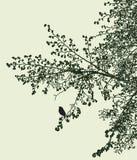 Sylwetka kwitnąć gałąź lipowy drzewo w wiosna czasie ilustracja wektor