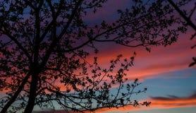 Sylwetka kwitnie drzewo przeciw pięknemu zmierzchowi Obraz Stock