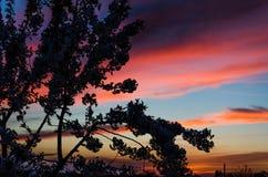 Sylwetka kwitnie drzewo przeciw pięknemu zmierzchowi Zdjęcie Stock