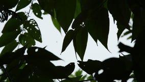 Sylwetka liścia dmuchanie od wiatru w ogródzie podczas gdy ciężki podeszczowy spadać zbiory