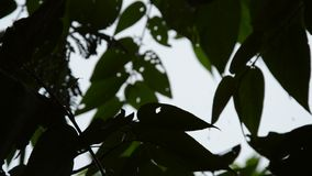 Sylwetka liścia dmuchanie od wiatru w ogródzie podczas gdy ciężki podeszczowy spadać zbiory wideo